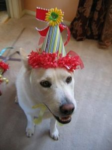 crowns_puppysbirthday_large